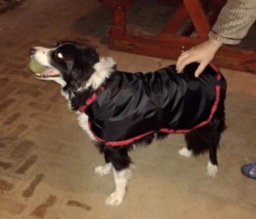 Black waterproof dog jacket