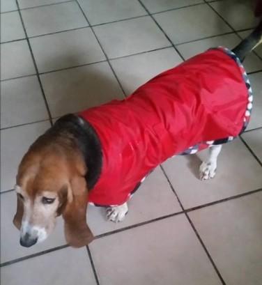Red waterproof dog jacket