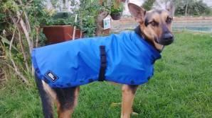 Royal blue waterproof dog jacket